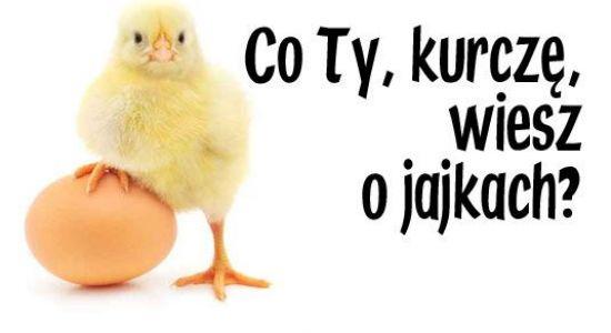 Czego nie wiemy o jajku
