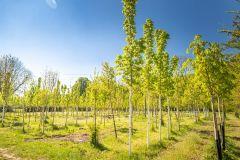 Stadt Wien erhält europäischen Stadtbaumpreis (ECOT) 2021